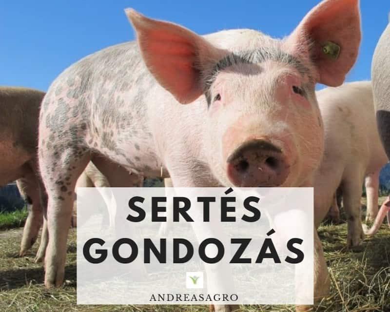 Sertesgondozas | AndreasAgro | Kulfoldi Munka